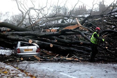 被狂风吹倒的树木砸在了小轿车上,幸运的是,这位司机逃脱了出来。