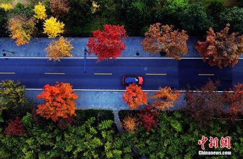 俯瞰杭州龙井路,各种不同颜色的树木间隔开来。