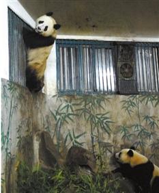 下图:成大成小(上)刚来杭州时的照片。记者 李震宇 通讯员 李选 摄