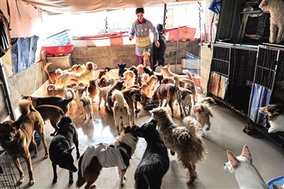善心阿姨收留50余只流浪狗 现在身体不好养不动图片