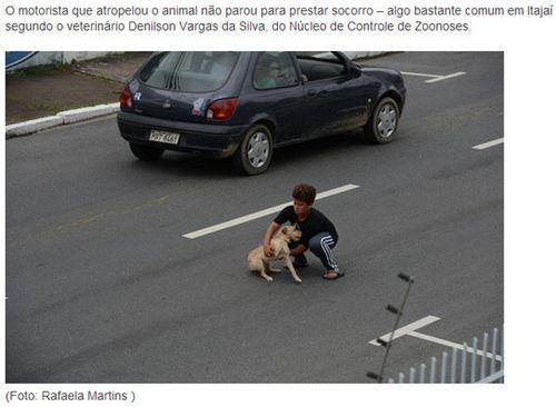 狗狗被撞司机逃逸11岁童勇闯马路抱其送医(图)