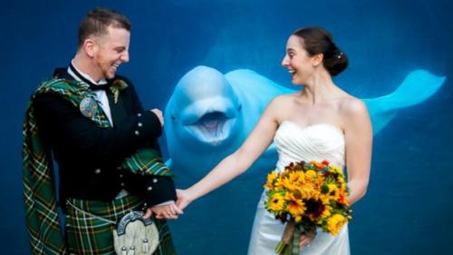 朱诺抢镜的时机恰到好处,憨态可掬的笑脸成就了一张令人忍俊不禁的结婚照。