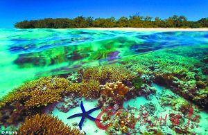 大堡礁的珊瑚。(资料图片)