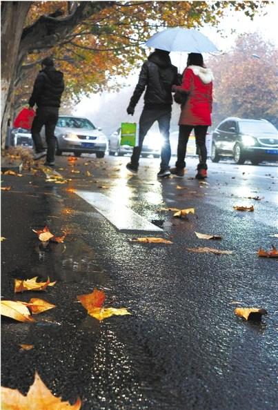昨天下午,义乌稠州中路上梧桐树叶随着冬雨飘落,平添了几份浪漫。本报记者 陶玉其 摄