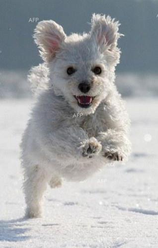 贝卢斯科尼爱犬开通脸谱账号已有数百好友(图)