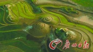 英矿场用碎石堆艺术品获年度最佳景观建筑(图)