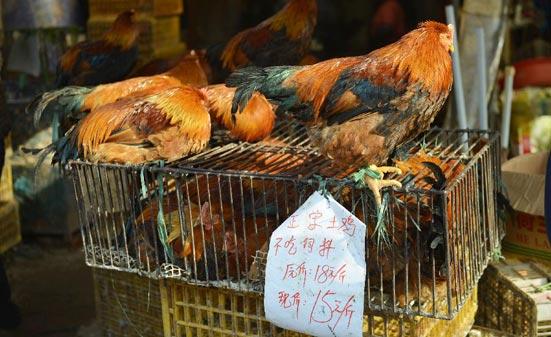 这是1月23日在杭州一农贸市场拍摄的等待出售的活禽。