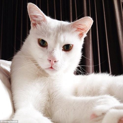 与欢乐卖萌的其他宠物不同,这只猫咪矜持地维持了高傲的仪态。