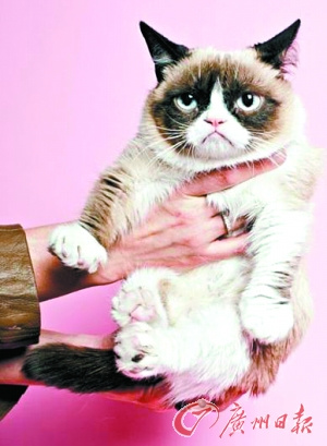 """研究盘点猫咪""""五宗罪""""主人呼唤假装听不见"""