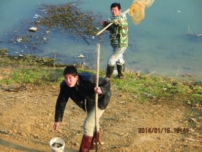 周边居民捕捞死鱼。