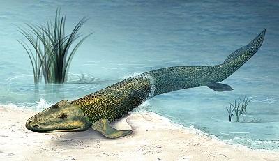 原始鱼类后鳍构造似四足动物或揭示生物进化