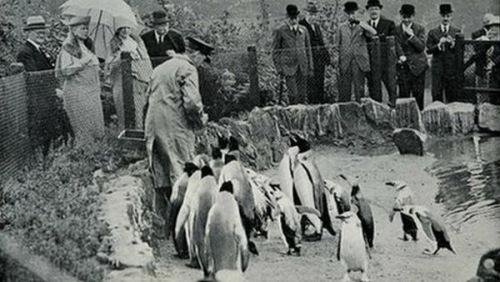 爱丁堡动物园企鹅家族满百年形态可掬游客最爱