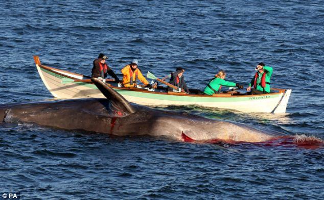 遭撞击死亡鲸鱼搁浅海滩血流不止染红海水(图)
