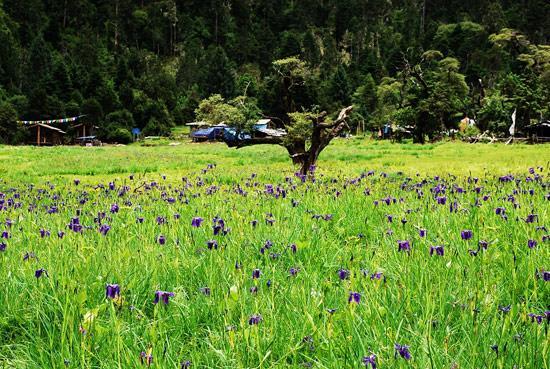 米林县南伊沟是西藏著名的风景区,珞巴族姑娘娅米就出生在这个美丽的地方。记者 麦正伟 摄