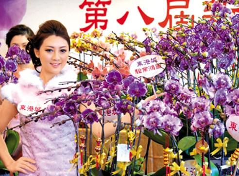 """图的兰花名为""""骏业鸿图"""",是2013亚洲国际兰花展分组冠军花王,此品种花卉将在香港马年年宵花市优惠出售。"""