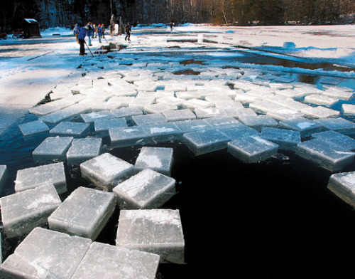 美国严寒湖面冻三尺工人收割冰砖忙得热火朝天