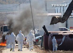 """韩国禽流感继续扩散 政府再次发布暂时""""禁行令"""""""