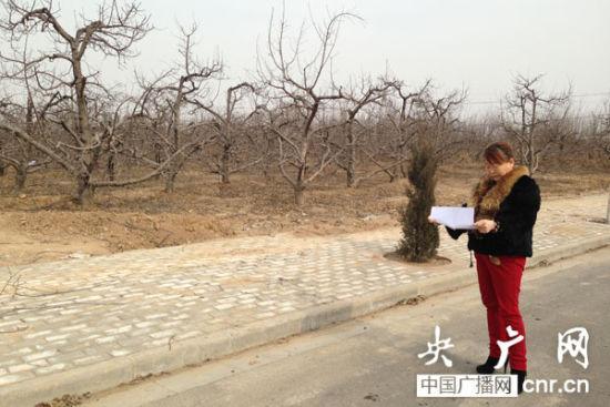 白水县政府与赵杰酌签订的项目,目前还是一片苹果地