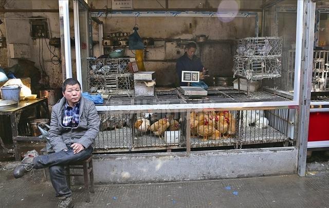 摊贩半天卖出2只鸡 温州多家餐饮店停售禽类菜肴