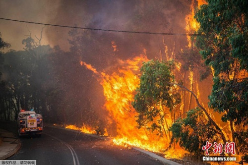 由于天气炎热,澳大利亚林火频发。图为珀斯发生的大火。