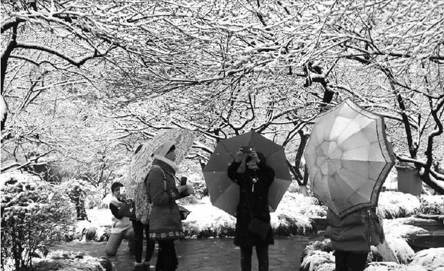 踏雪寻梅景观20年来最美 杭州灵峰昨迎大量游客