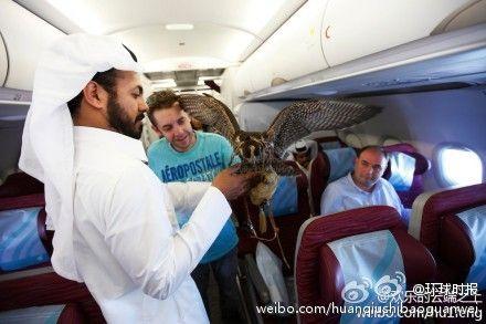 阿拉伯男子展示老鹰
