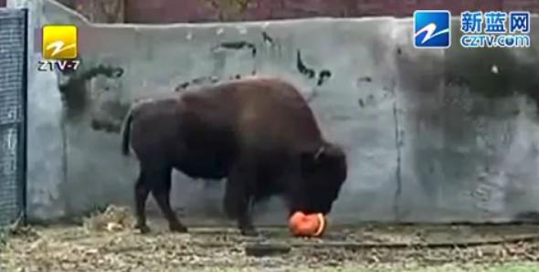 长春动物园 大象踩死饲养员